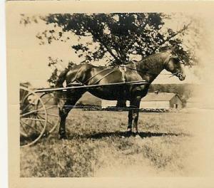 2000.1.129.D HJ Stanclift Horse